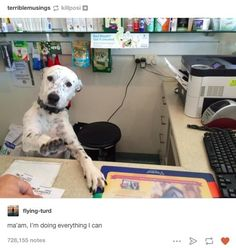 Bless the internet. Bless dogs. Bless internet dogs.