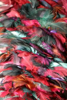 Feather Duster by Kathryn Campbell Dodd