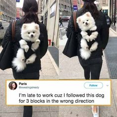 I don't blame her, I'd follow that dog too