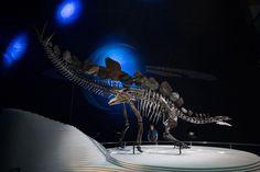 Лондон, Англия Самый полный скелет стегозавра из когда-либо найденных находится в музее естествознания.