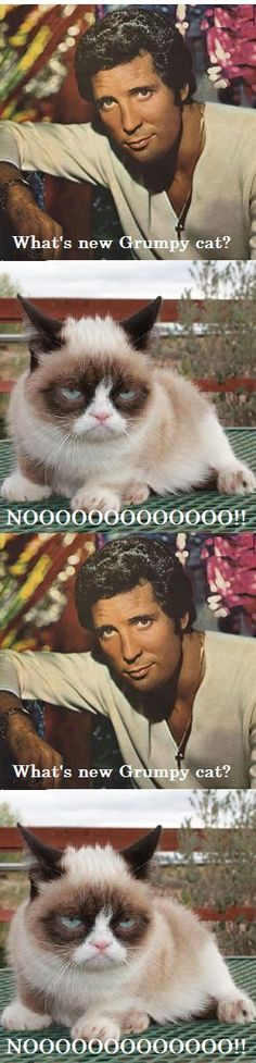 Tom Jones and Grumpy Cat!