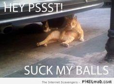Suck my balls cat humor | PMSLweb