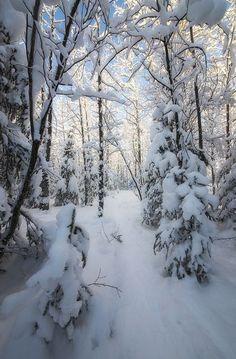 Winter Love, Winter Is Coming, Winter Snow, Winter Christmas, Winter White, Yule, Alaska, Snowy Day, Snowy Woods