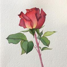 Of Flowers Drawings Referral: 7598677372 Watercolor Rose, Watercolor Illustration, Painting & Drawing, Watercolor Paintings, Iris Painting, Watercolours, Arte Floral, Botanical Art, Flower Art