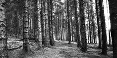 Landskapsfotografering, sorthvitt, blackandwhite
