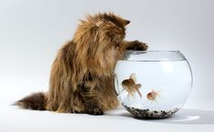 TOP 96 cat breeds -