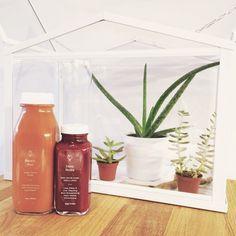 Greenhouse Juice Co. toronto juices with my terrarium
