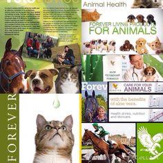 Forever animals Det finns även produkter för våra små vänner. Forever Living Company, Forever Freedom, Forever Business, Forever Aloe, Forever Living Products, Live Laugh Love, Pet Health, Beauty Care, Pet Care