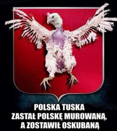 Humor, Christmas Ornaments, Holiday Decor, Memes, Pj, Poland, Humour, Christmas Jewelry, Meme