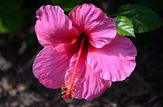 Pretty In Pink Print By Debra Martz