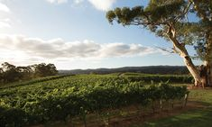 Happy holidays: 20 wineries to visit in the Adelaide Hills - SALIFE Wine List, Outdoor Settings, Tasting Room, Pinot Noir, Fine Wine, Art Festival, Wineries, Light Recipes, Happy Holidays