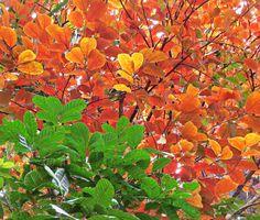 flora em composição, Ufam