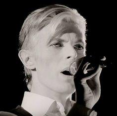 David Bowies OAP bus pass.
