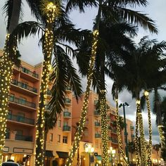 Downtown Boca is equal parts tropical and festive this holiday season