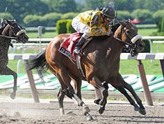 Cat Moves(2006)Tale Of The Cat- Dance Move By Capote. 4x5 To Northern Dancer. 6 Starts 3 Wins 2 Thirds. $315,350. Won 2009 Prioress S(G1), 3rd Test S(G1), 3rd 2010 My Juliet S.