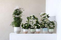 Weiße Blüten mit Tontöpfen im skandinavischen Landhausstil. http://landhaus-look.de/natu%CC%88rliche-duft-in-puristischem-weiss-gardenie-jasmin-und-stephanotis#more-15698