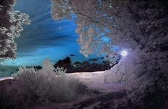infrared photography, artist source not given