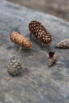Pine cone animals / UKKONOOA: Metsäretkellä Nuuksiossa / Camping in a national park
