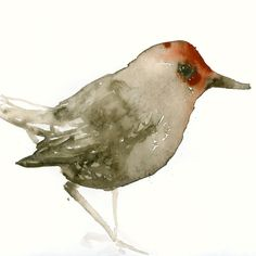 Brown and Red Bird - Fine Art Print from Original Watercolor Painting.  via Etsy.