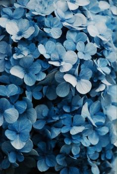 Latest Photo Hydrangeas decoration Thoughts If you want a garden bloom using show attraction, hydrangea bouquets will be absolutely stunning. Pretty Flowers, Blue Flowers, Beautiful Flowers Photos, Colorful Roses, Exotic Flowers, Summer Flowers, Paper Flowers, Wild Flowers, Beautiful Things