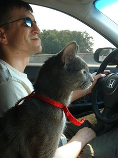 So cute! My boy kitty likes drives too.