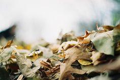 Inspiration Monday: Hello Autumn!
