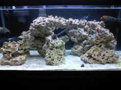FOWLR - fish only with live rock - aquarium tank