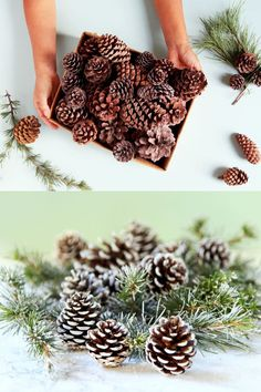 DIY Snow Covered Pine Cones & Branches Ways! These DIY snow covered pine cones & branches will instantly transport you to an enchanted snowy wonderland! Christmas Projects, Christmas Home, Holiday Crafts, Christmas Holidays, Primitive Christmas, Country Christmas, Christmas Christmas, Pine Cone Art, Pine Cone Crafts