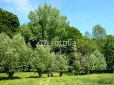 Grüne Wiese mit Bäumen am Barkhauser Weg zwischen Oerlinghausen und Asemissen am teutoburger Wald