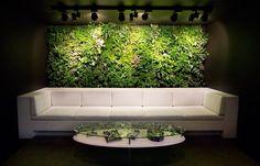 succulent vertical gardens | ... Vertical Gardens : Office Waiting Room Verical Garden Feature Wall