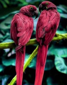 Exotic pets 5277724551786350 - Apple Source by bontvi Cute Birds, Pretty Birds, Beautiful Birds, Animals Beautiful, Tropical Birds, Exotic Birds, Colorful Birds, Exotic Pets, Nature Animals