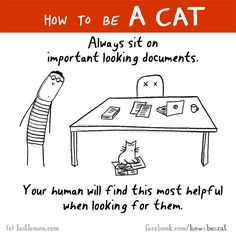 HOW TO BE A CAT: Always sit on important looking documents. Your human will find this most helpful when looking for them.