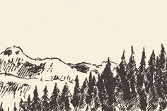 Fir forest in the mountains by grop on @creativemarket
