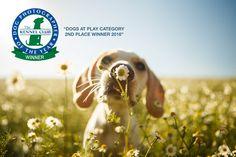 O 2� lugar do Dog Photographer of the Year 2016 � nosso!