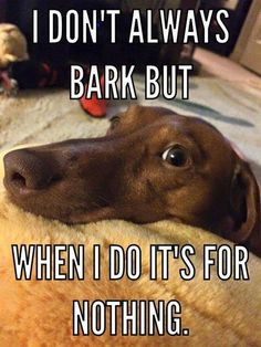 Dachshund funny photo about barking Dachshund Funny, Dachshund Quotes, Dachshund Puppies, Dachshund Love, Dog Quotes, Funny Dogs, Funny Animals, Cute Animals, Daschund