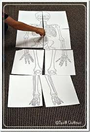 pinterest human skeletor E INfantil - Buscar con Google