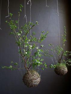 string gardens imagin par le designer floral fedor van. Black Bedroom Furniture Sets. Home Design Ideas