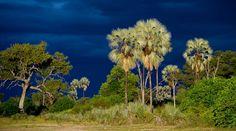 ©Wilderness Safaris | Botswana