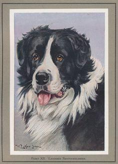 Más tamaños   pl XII Onze honden   Flickr: ¡Intercambio de fotos!
