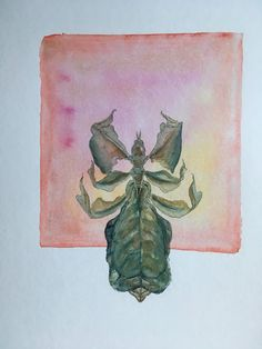 Sarah J. Loecker : Step by Step pictures of the fourth in my 20 in Watercolor Paper, Watercolor Paintings, Sarah J, History Museum, Natural History, Drawings, Illustration, Nature, Projects