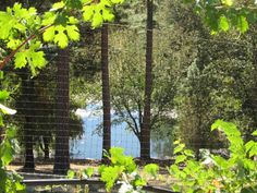 Another view of the lake through the vineyard. http://www.napaandbordeaux.com