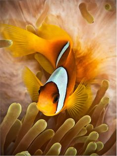 Fun Facts About Sea Animals