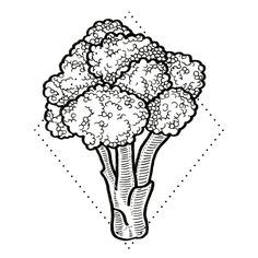 This broccoli was a big hit at the Philly convention (or cauliflower as one guy said) and it waiting for a home - em16.com/scheduling/ to book #drawing #brooklyntattoo #tattoo #tattooart #art #lines #linework #finelines #artist #blacktattooart #tattooartist #newyorkcity #nyc #dotwork #brooklyn #pentel #blacktattoomag #etching #blackwork #vegantattoo #btattooing #swashdrive #dankubin #skinartmag #supportgoodtattooers #blackworkerssubmission #blacktattooart #btattooing #qttr #veganink…