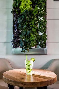 BRGR Kitchen + Bar | Treasure Island Beach Resort | Florida Vacation Beach Hotels, Beach Resorts, Treasure Island Beach, Edgewater Beach, Florida Vacation, Naples, Bar, Kitchen, Plants