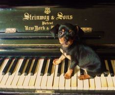 "Two things I like.....an old piano and a ""new"" doxie"