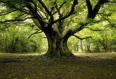 Tree Rings or Growth Rings
