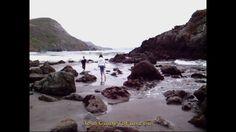 Muir Beach - Jellyfish at Muir Beach north of San Francisco on Highway 1.  http://www.tourguidetofun.com/muir-beach-glass-beach/  #muirbeach #nocal #highway1