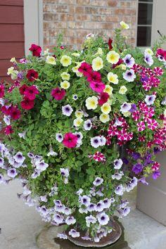 Simple cascading petunia's. Love them!
