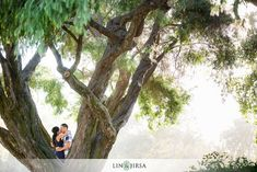 love how the couple is in nature, but nature takes the stage. beautiful tree