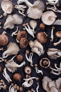 Sharon Radisch | Photographer | NYC | Food | Mushrooms